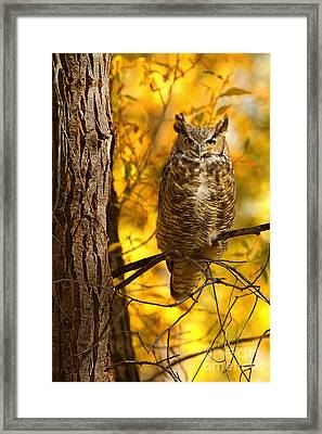 Golden Owl Framed Print by Aaron Whittemore