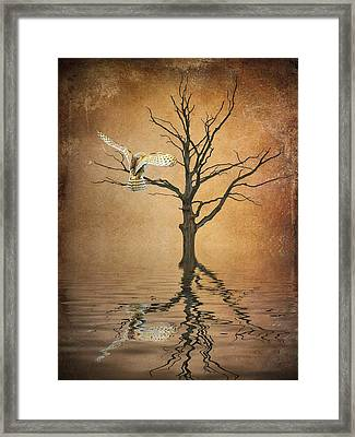 Golden Owl Framed Print by Sharon Lisa Clarke
