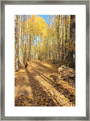 Golden Path Framed Print by Jim Sauchyn