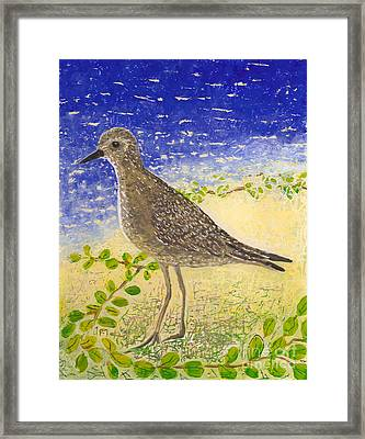 Golden Plover Framed Print
