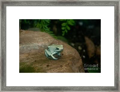 Golden Poison Frog Mint Green Morph Framed Print by Mark Newman