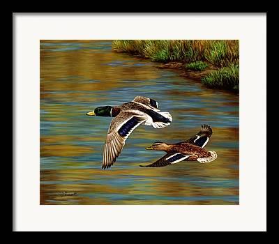 Waterfowl Paintings Framed Prints
