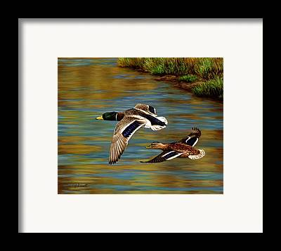 Duck Hunting Framed Prints