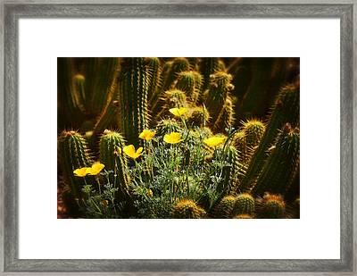 Golden Poppies And Torch Cactus  Framed Print by Saija  Lehtonen