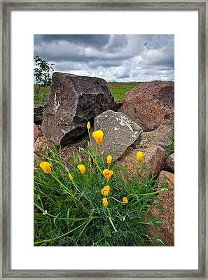 Golden Poppy Framed Print by Peter Tellone