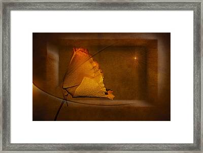 Golden Poppy Framed Print