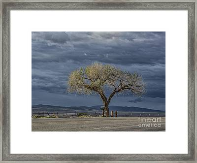 Golden Promise Framed Print