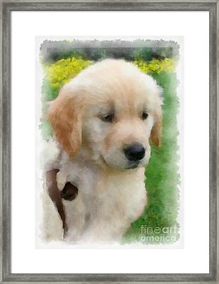 Golden Puppy Owen Framed Print by Betsy Cotton