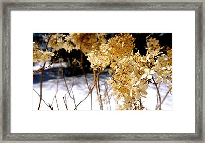Golden Purity Framed Print by Danielle  Broussard