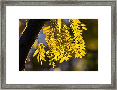 Golden Rain Framed Print by Chad Dutson