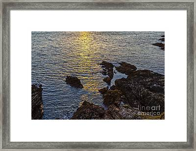 Golden Reflection Framed Print