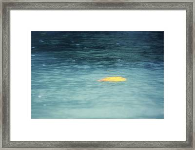 Golden Reflections Framed Print by Melanie Lankford Photography