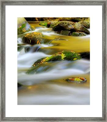 Golden Reflections Of Fall Framed Print
