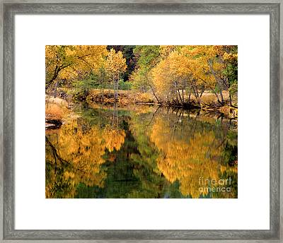 Golden Reflections Framed Print by Terry Garvin