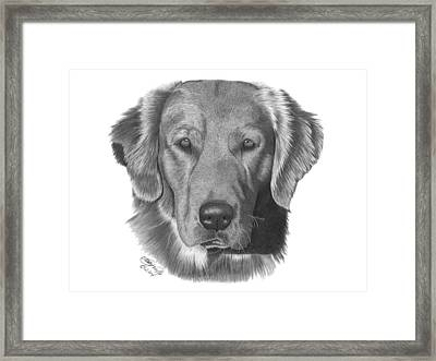 Framed Print featuring the drawing Golden Retriever - 026 by Abbey Noelle
