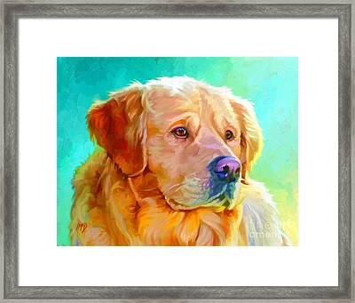 Golden Retriever Art Framed Print by Iain McDonald