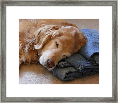 Golden Retriever Dog Forever On Blue Jeans Framed Print by Jennie Marie Schell