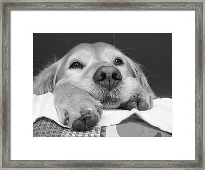 Golden Retriever Dog I See You Framed Print by Jennie Marie Schell