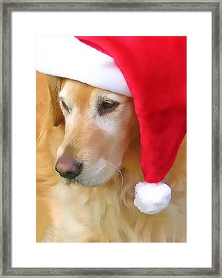 Golden Retriever Dog In Santa Hat  Framed Print by Jennie Marie Schell