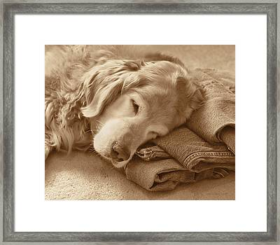 Golden Retriever Dog On Forever On Blue Jeans Sepia Framed Print by Jennie Marie Schell