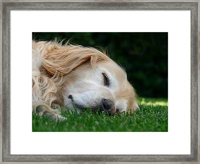 Golden Retriever Dog Sweet Dreams Framed Print by Jennie Marie Schell