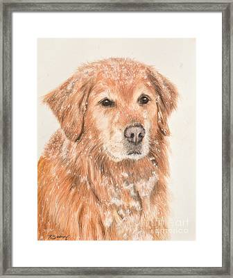 Golden Retriever In Snow Framed Print