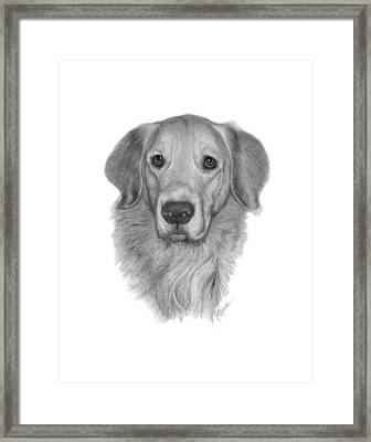 Golden Retriever Framed Print by Joe Olivares