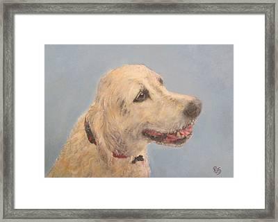 Pet Portrait Of Golden Retriever Maisie  Framed Print