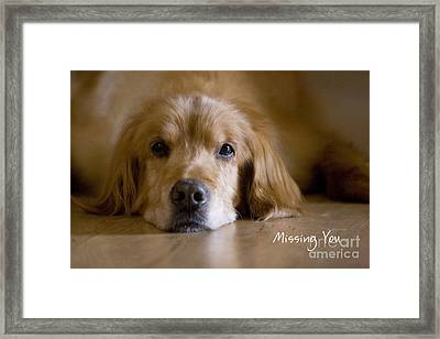 Golden Retriever Missing You Framed Print by James BO  Insogna