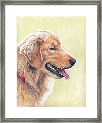 Golden Retriever Profile Framed Print by Charlotte Yealey