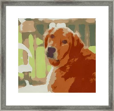 Golden Retriever Profile Framed Print by Dan Sproul
