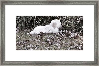 Golden Retriever Puppy 2 Framed Print by Andrea Anderegg