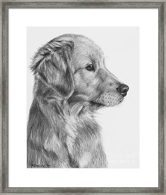 Golden Retriever Puppy In Charcoal One Framed Print by Kate Sumners