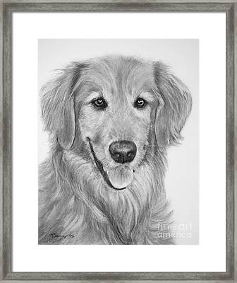 Golden Retriever Sketch Framed Print