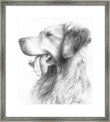 Golden Retriever Study Framed Print