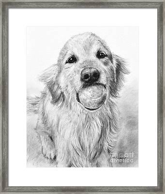 Golden Retriever With Ball Framed Print by Kate Sumners