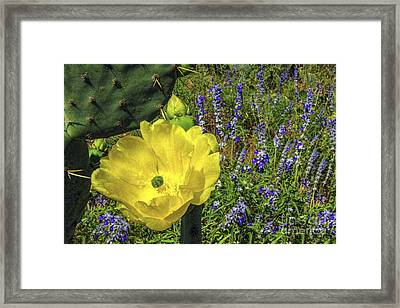 Golden Riders Of The Purple Sage Framed Print