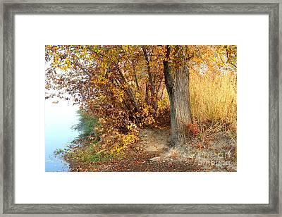 Golden Riverbank Framed Print by Carol Groenen