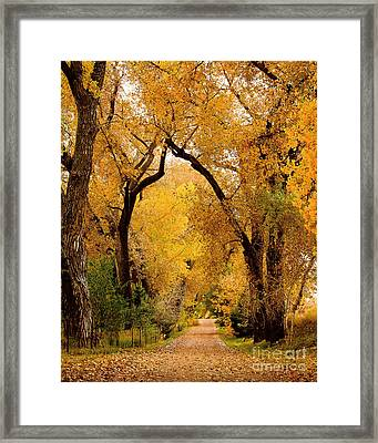 Framed Print featuring the photograph Golden Roads by Steven Reed