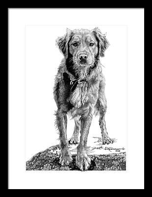 Retriever Drawings Framed Prints