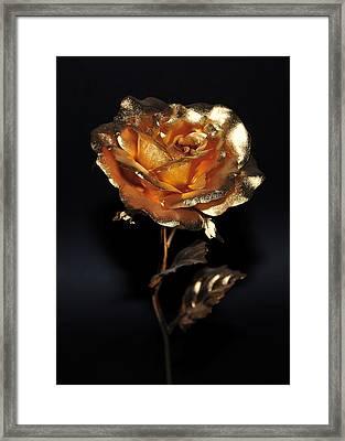 Golden Rose Framed Print