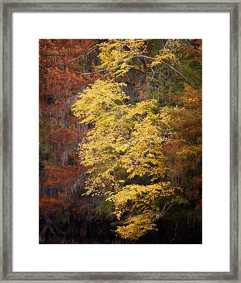 Framed Print featuring the photograph Golden Rust by Lana Trussell