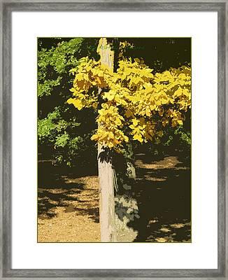 Golden Shadows Framed Print by Sonali Gangane