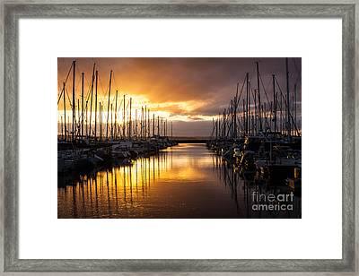 Golden Shilshole Marina Glow Framed Print by Mike Reid