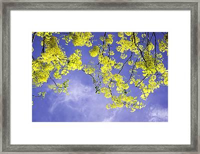 Golden Shower Framed Print by VistoOnce Photography
