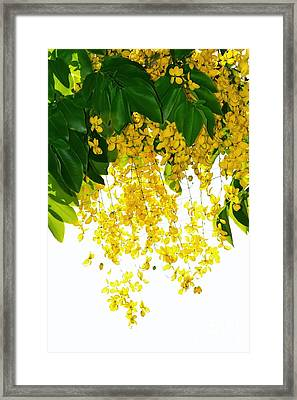 Golden Showers Flowers Framed Print