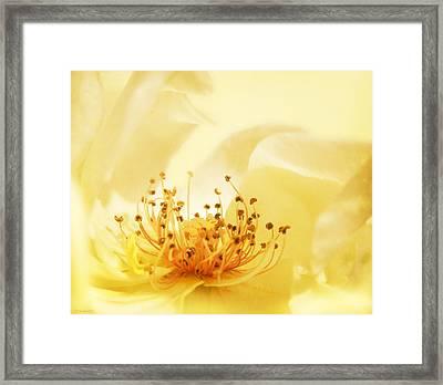 Golden Showers Rose Framed Print