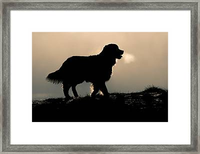 Golden Silhouette Framed Print by Erkki Alvenmod