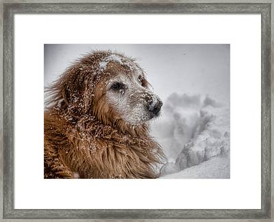 Golden Snow II Framed Print by John Crothers