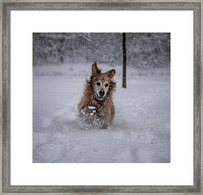 Golden Snow Framed Print by John Crothers